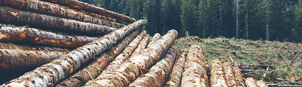 Чиновники не досчитались миллиарда гектаров российского леса